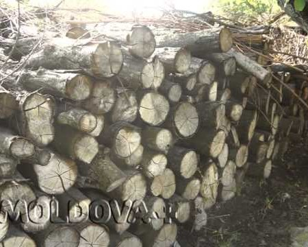 MOLDOVA+ Focul cu biomasă, mai eficient și mai econom