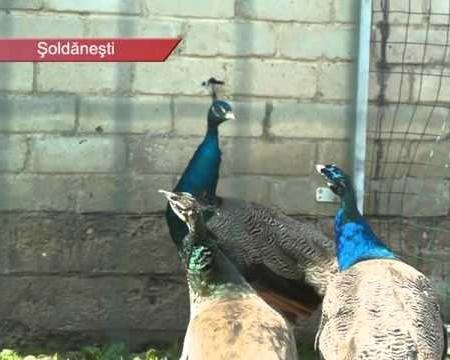 ESTONIA iși susține agricultura, și consumă alimente de calitate