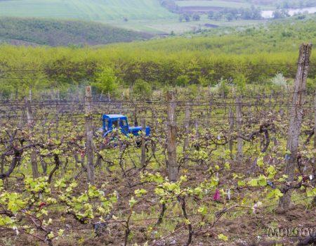 De ce agricultorii moldoveni nu-și asigură culturile?