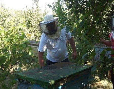 MOLDOVA+    Albinarii cu munca, intermediarii – cu punga