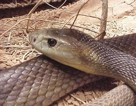 Oficiul de sănătate, adăpost pentru șerpi