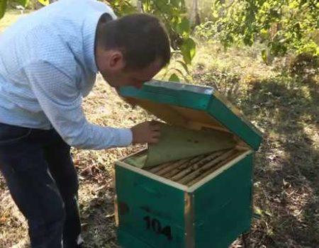 Ștefan Sandic, apicultorul cu visul realizat