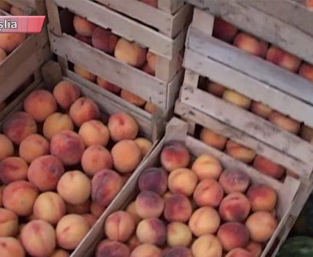 AGRICULTURA, ramura principală a economiei Moldovei
