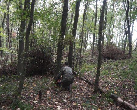 MOLDOVA+ Fâșiile forestiere de protecție, lăsate fără protecție