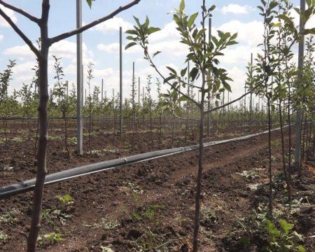 Cooperarea sporește dezvoltarea pomiculturii. Experiența ucrainemilor o dovedește