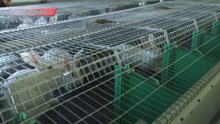 Producție autohtonă de calitate grație investițiilor în sectorul zootehnic