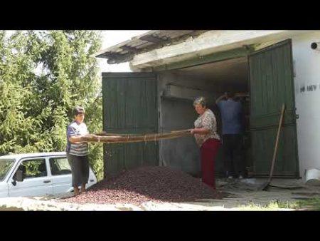 Silvicultorii își extind activitățile