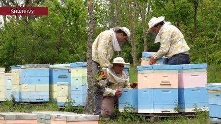 ALTERNATIVE Dulce e viața apicultorilor din Moldova?