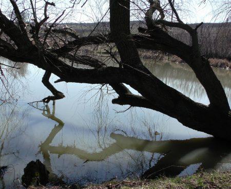 Încurcate ramurile pomului, ca și drumul omului…